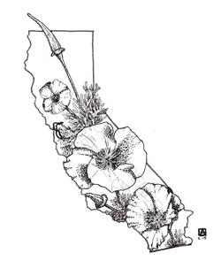 Cali (no color)