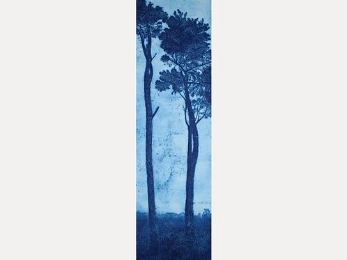 'St Michael's Pines, Blue 1'