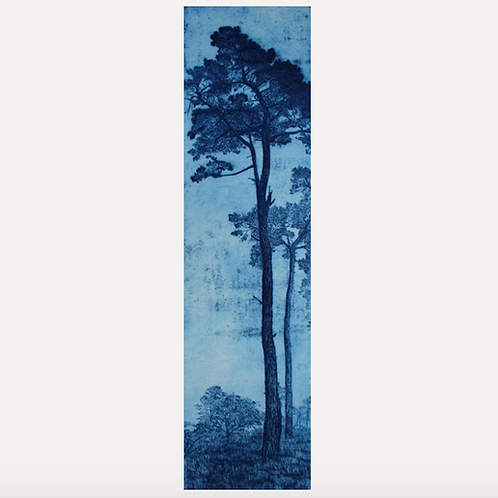 'St Michael's Pines, Blue 2'