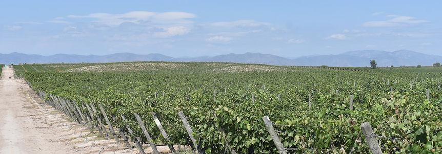 Haarth RedPuro Organic Wine Imports