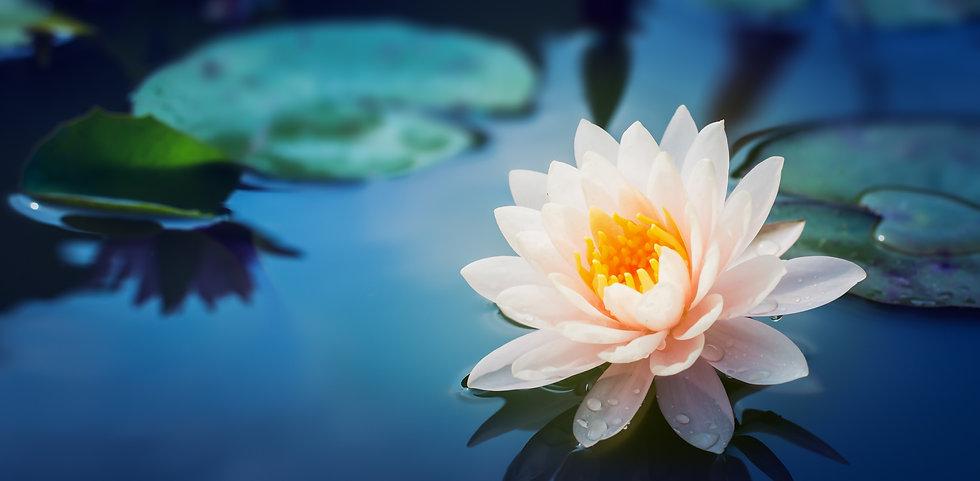 Flower-Lotus-Edit_edited.jpg
