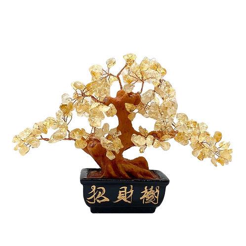 [當旺財位]黃晶招財樹