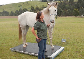 mobile weighing horse