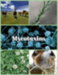 Mycotoxins horse