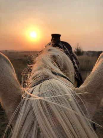 Charli sunset web.jpg