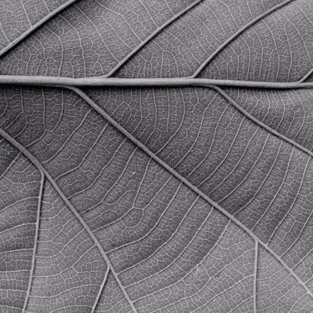 BW leaf.jpg