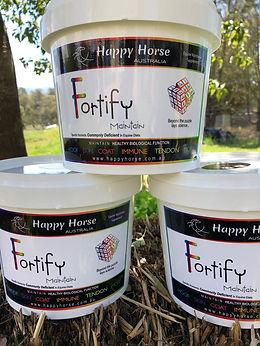 Fortify Buckets.jpg