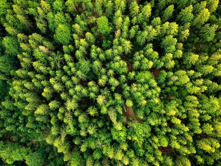 Produção florestal - Mas afinal, o que é isso?