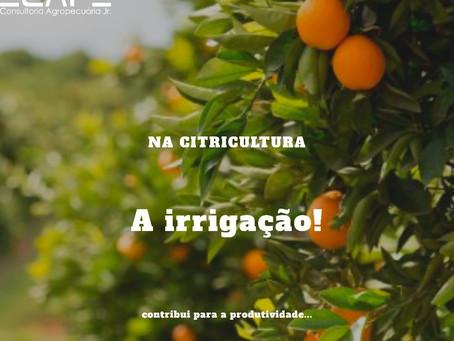 Irrigação e seus benefícios na citricultura e na produtividade
