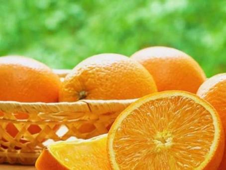 Colheita - fator de sucesso na cultura do citrus