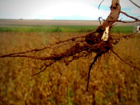 Compactação do solo em lavouras de soja
