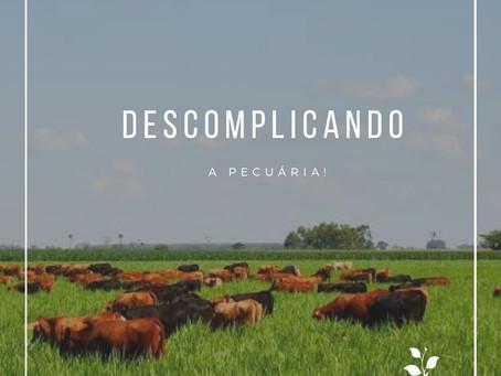 CICLO DA PECUÁRIA