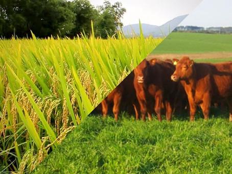 Pastagens cultivadas em área de lavoura