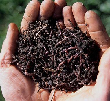 sistemas de compostagem.jpg