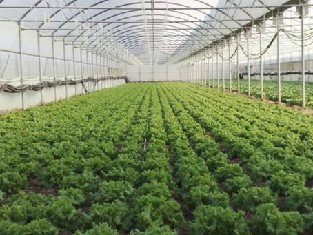 Proteja seu cultivo e aumente a produtividade!