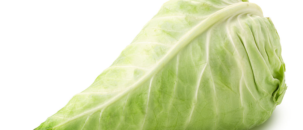 Early Jersey Wakefield Cabbage