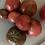 Thumbnail: Cherokee Purple Tomato