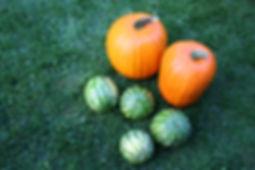 pumpkin2009.JPG
