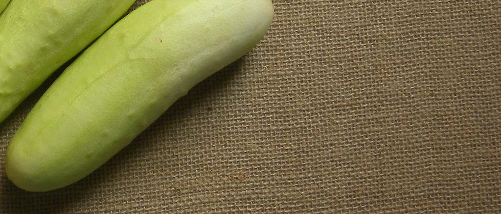 White Wonder Cucumber