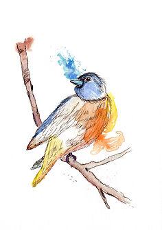 A5 bird.jpg