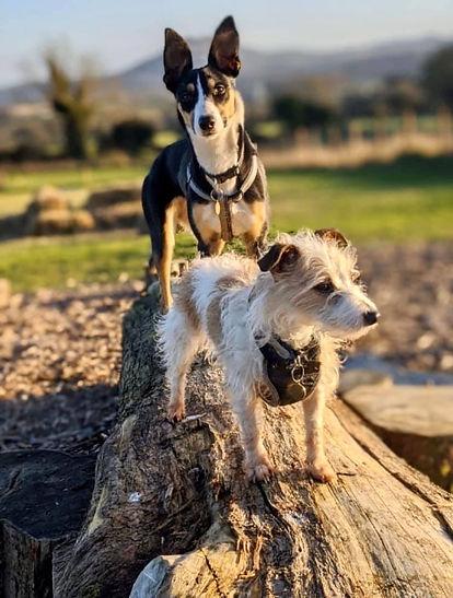 Shasta & Flynn dog park jan20.jpg