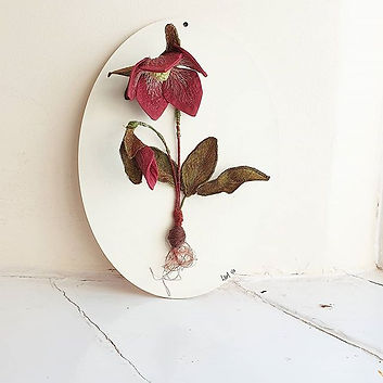 This 1of2  hellebore study will be shown