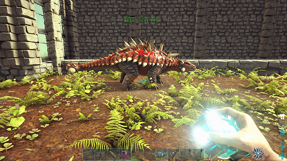 NA PVE 217 Red Female Unlevelled Anky