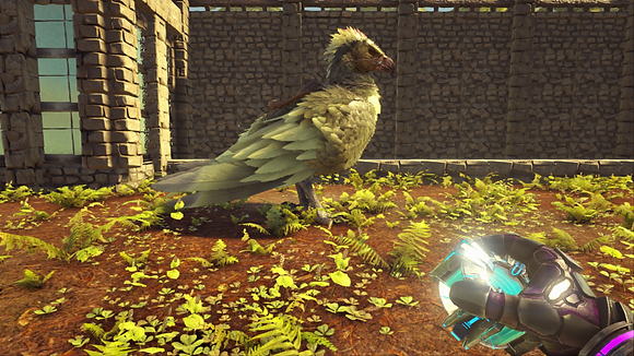 NA PVE 240 Male Levelled Argy