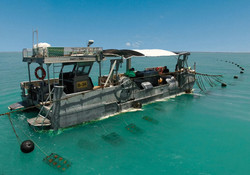 Pearl Farm Cleaning Boat