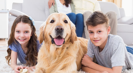 Kids and their Golden Retriever dog in a living room after it was cleaned by a professional eco-friendly green cleaning service in West Kelowna.