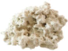 Coral Pure