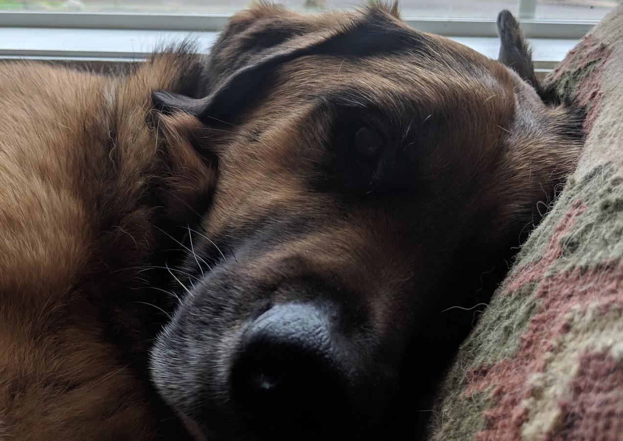 Brother Dudders snoozing.jpg