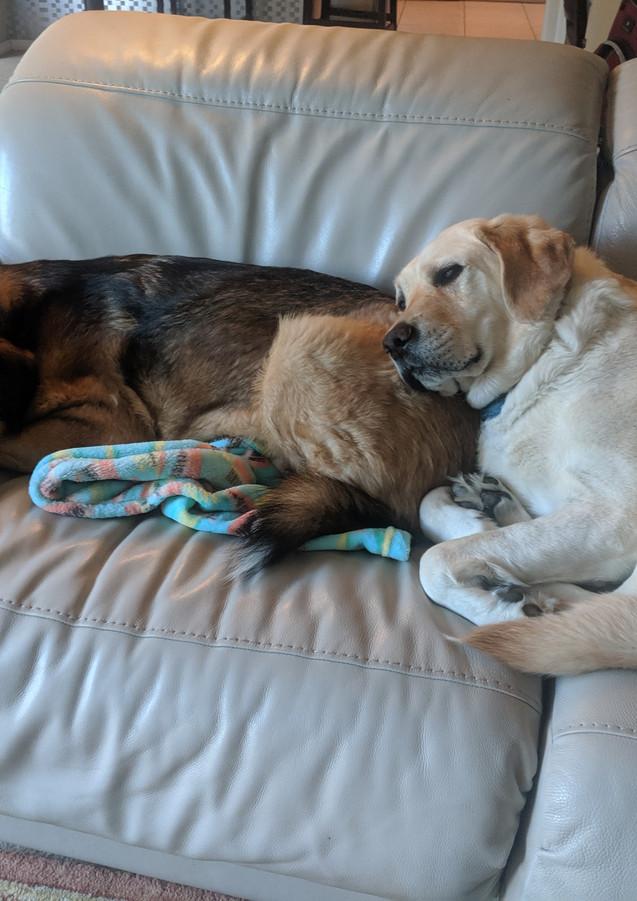 Dudley is a Furry Pillow.jpg
