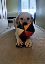 My Favorite Ball.jpg