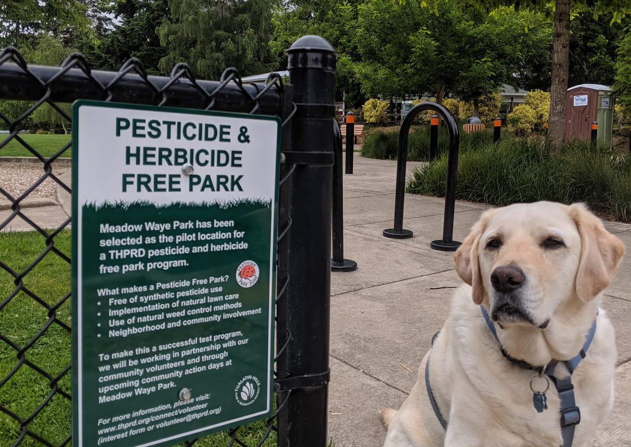 Posing in my chemical free park we helped form.jpg