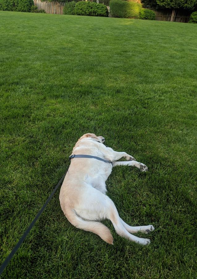 Green grass I think I will flop.jpg