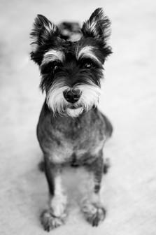 Scrapyard Dog, Mississippi