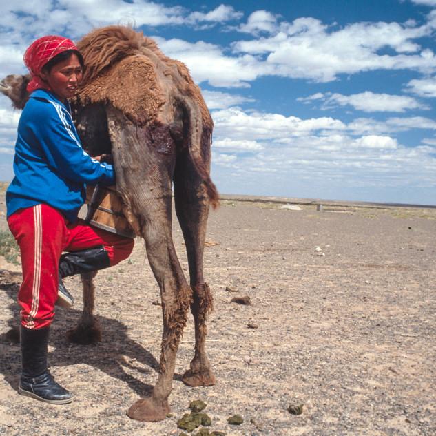 Mongolia083.jpg