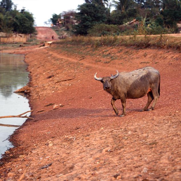 Laos083.jpg