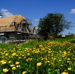 thatched cottage, Torrington, Devon