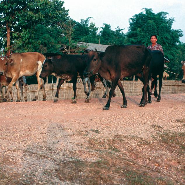 Laos098.jpg