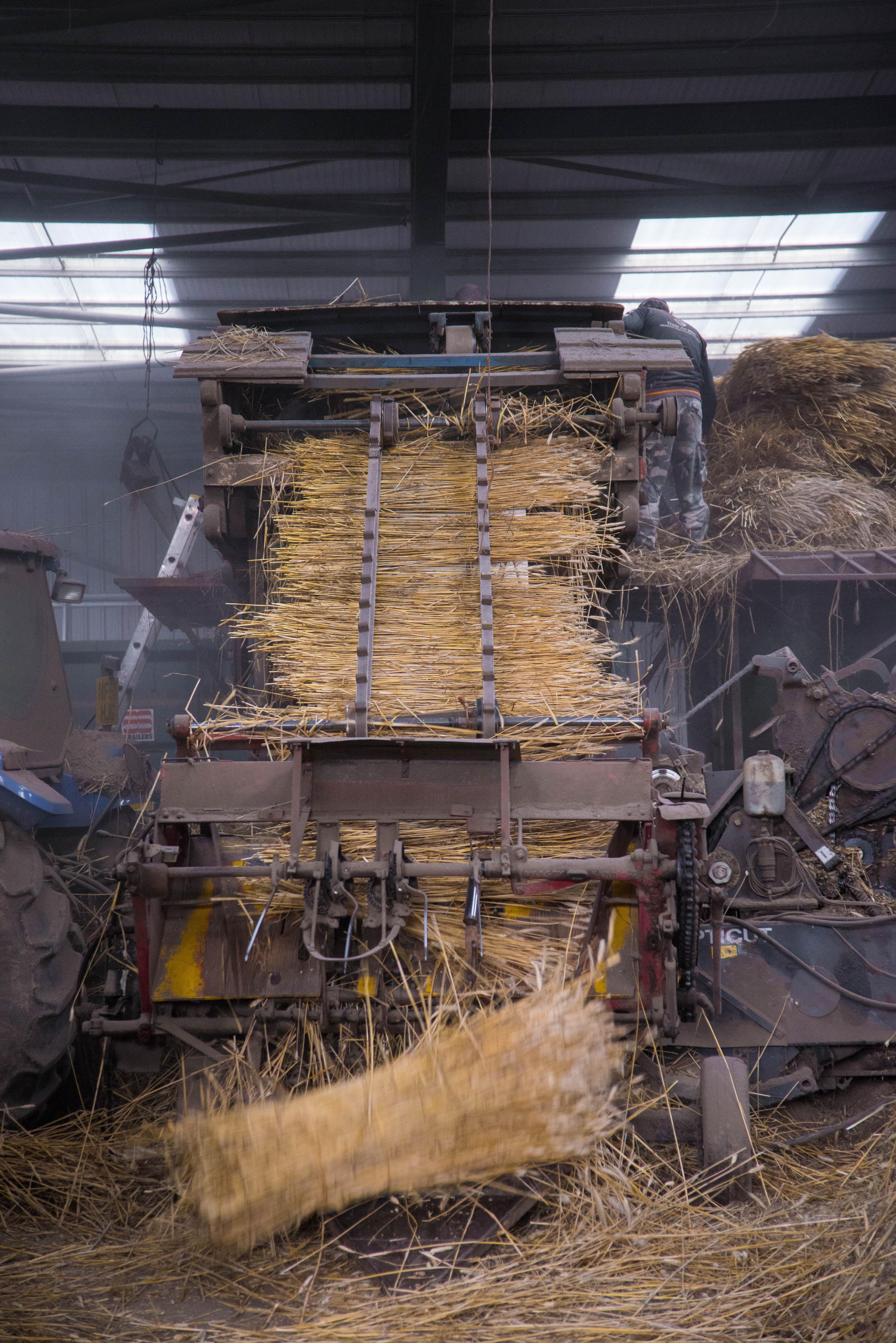 Wheat reed in Binder
