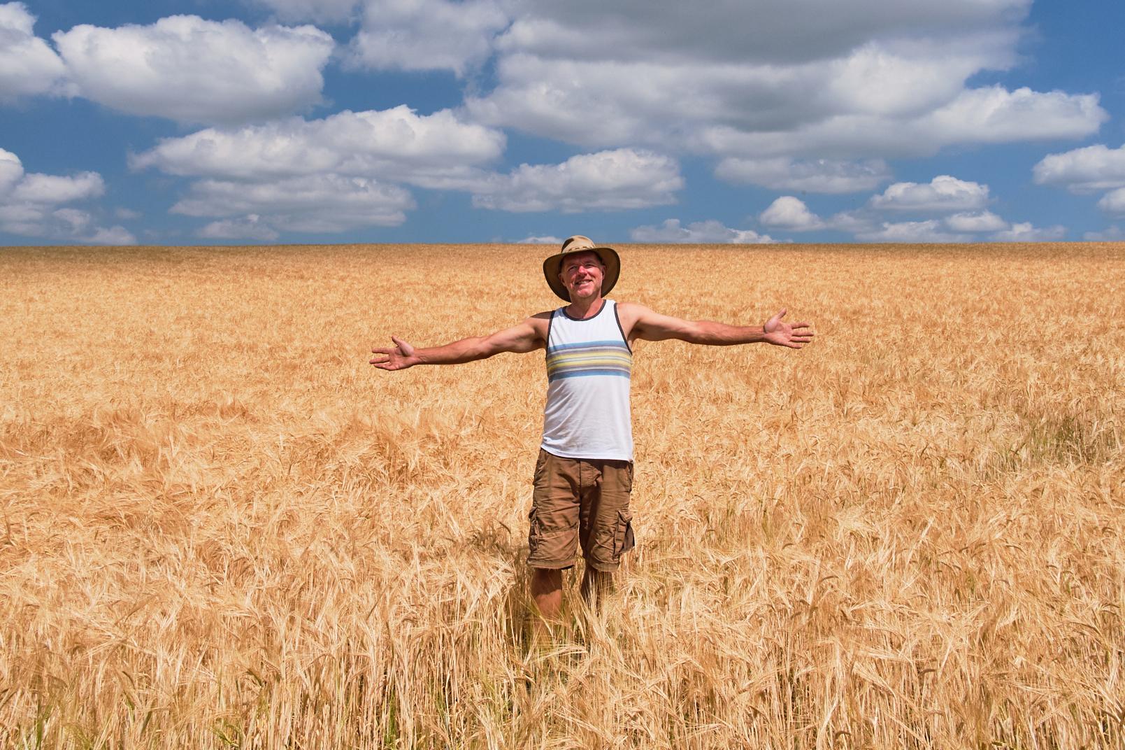 Devon Wheat Field