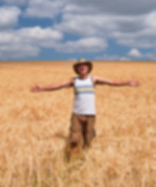Wheat field in July, South Molton, North DEvon. Mark Harrington Master Thatcher