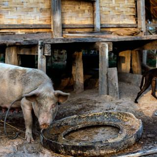 Laos057.jpg