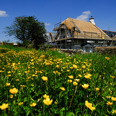 Thatching in springtime