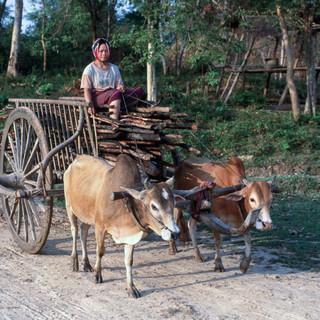Laos084.jpg