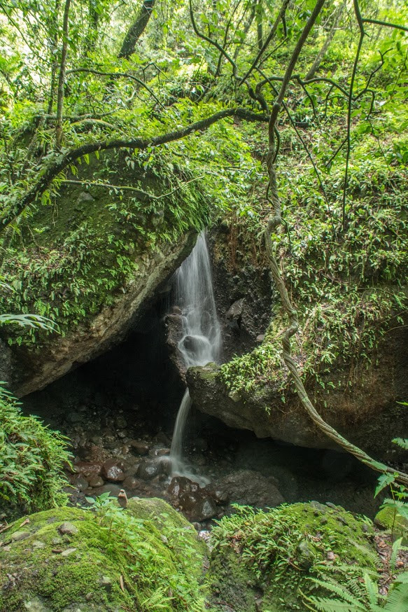 bosque de tepoztlan
