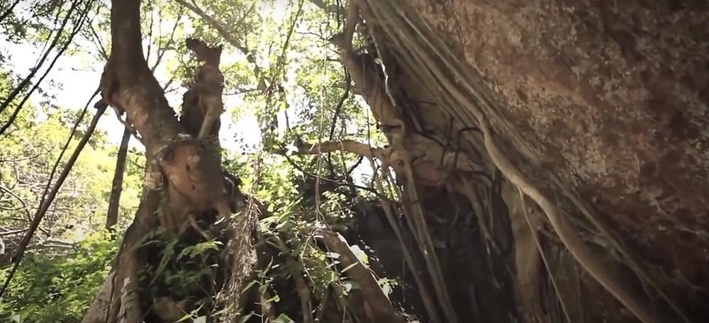 Tepoztlán arbol bosque naturaleza meditacion taller