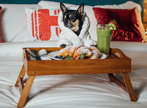 Hotel Pet Friendly en Tepoztlán, La Posada del Valle, uno de los Hoteles Pet Friendly de Morelos